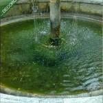 La fontana. Alcuni faretti sono rotti da anni.