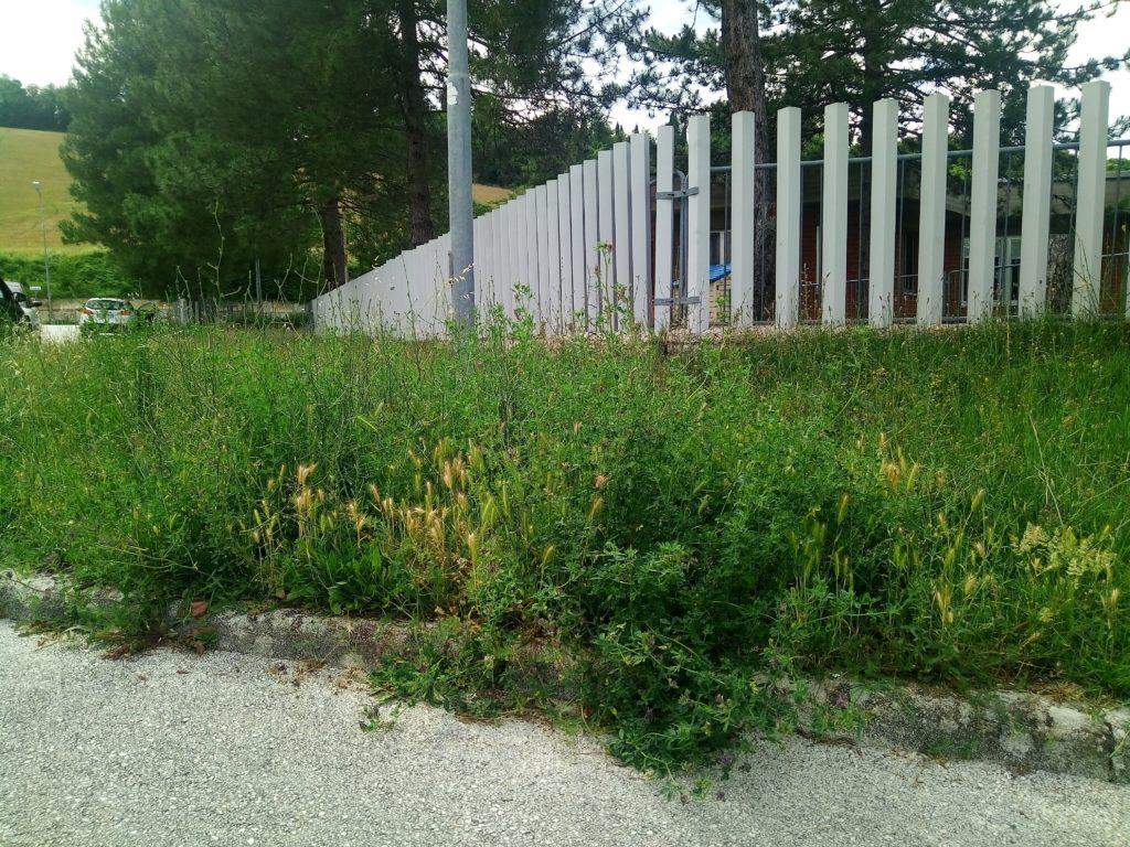 Se c'avete i cunili davanti all'asilo c'è l'erba spagna.